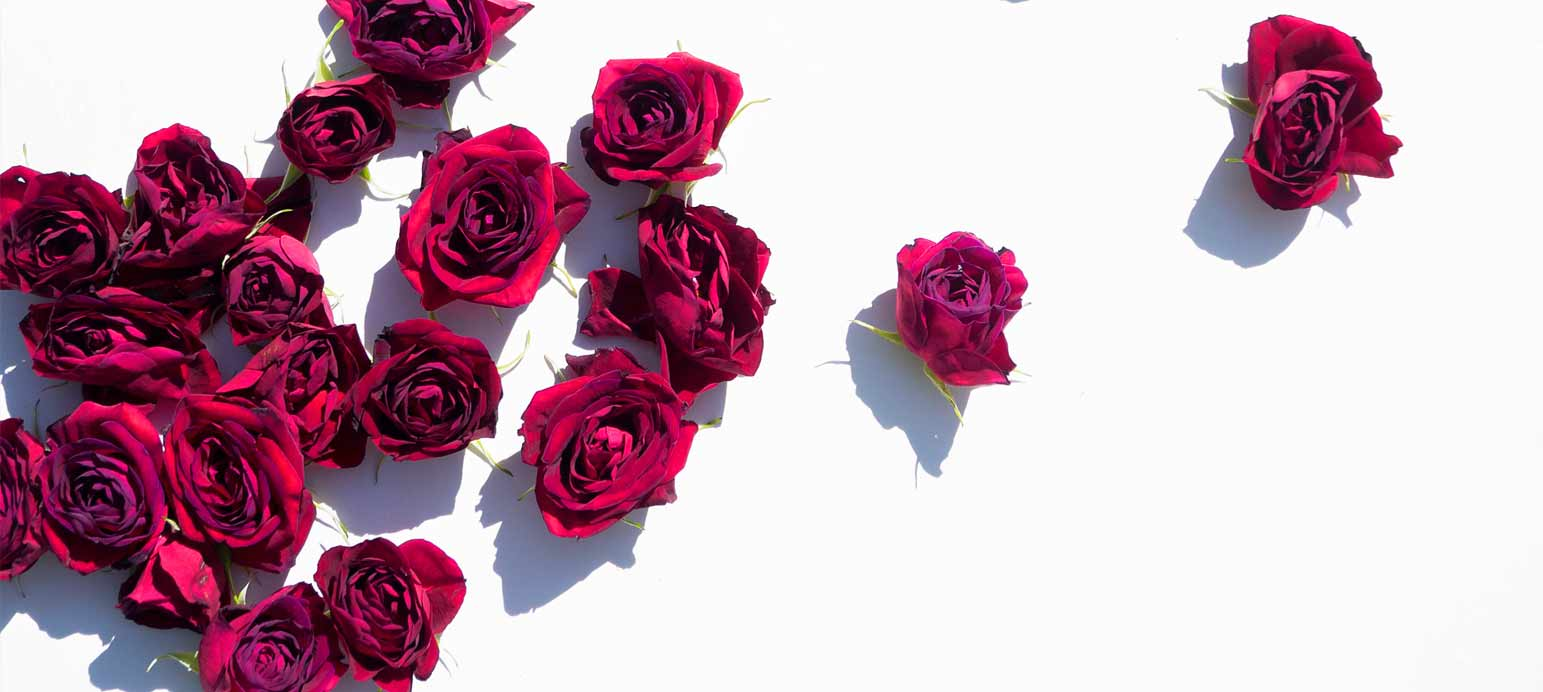 infinity-rosen geschenke